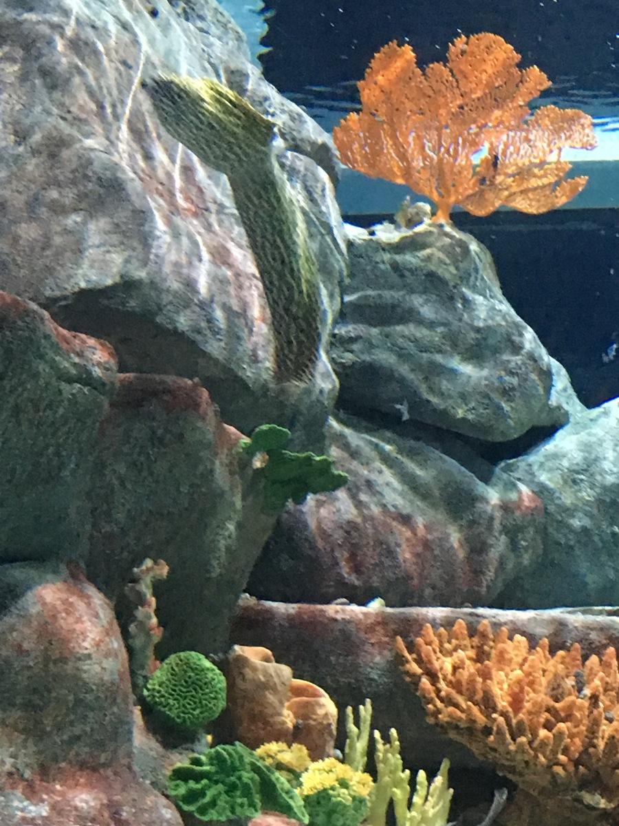 Parte de un acuario